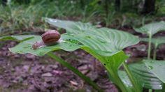 Little snail !