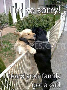 I`m so sorry! I heard your family got a cat!