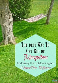The best way to get rid of mosquitoes and enjoy the outdoors again! Use in your backyard, while camping, etc! Chemical free and it actually works! Spring Activities, Outdoor Activities, Roots Show, Fun Craft, Mosquito Repelling Plants, Weed Control, Mosquitoes, Garden Pests, Outdoor Fun