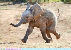 Happy Dance :) I may have already pinned this but who cares, it's too cute!