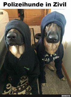 Polizeihunde in Zivil   Lustige Bilder, Sprüche, Witze, echt lustig