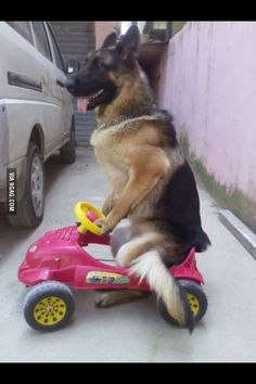 They see me rollin !