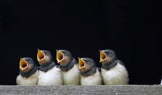 bird choir.