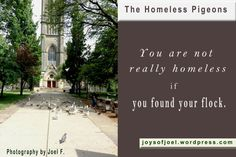 the homeless pigeons, photos and quotes about pigeons, birds, joys of joel poems Swan Lake, Flocking, Pigeon, Poems, Finding Yourself, Birds, Joy, Random, Quotes