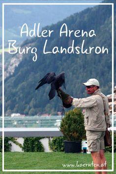 Animals, Majestic Animals, Family Vacations, Tourism, Road Trip Destinations, Animales, Animaux, Animal, Animais