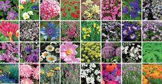Panoramica di oltre 30 piante perenni che possono essere messe a dimora in giardino (anche roccioso), utili per le bordure, vaso, terrazza e balcone.