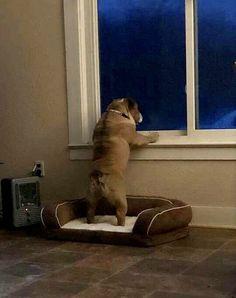Neighborhood Watch, The Neighbourhood, Dogs, Animals, The Neighborhood, Animales, Animaux, Pet Dogs, Doggies