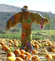 Buncombe County News :: Scarecrow Contest at Lake Julian!