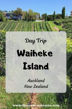 """A day trip to Waiheke Island, only from Auckland, should be included in your New Zealand travel. The """"Island of Wine"""" boasts over 20 boutique wineries and stunning beaches. New Zealand Wine, North Island New Zealand, New Zealand Itinerary, New Zealand Travel Guide, Waiheke Island, Auckland New Zealand, Beach Fun, Day Tours, Beautiful Islands"""