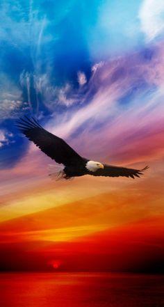 Flying Eagle - Colorful sky~Animal Spirit Guide: The Eagle The Eagles, Bald Eagles, Photo Aigle, Beautiful Birds, Animals Beautiful, Photo Bretagne, Eagle Wallpaper, Iphone Wallpaper, Animal Wallpaper