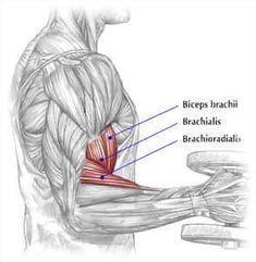 bigger biceps brachialis exercise