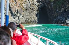 Enjoy the rugged coastline and wildlife, including seals, on a Bruny Island Cruise with Rob Pennicott Wilderness Journeys in Tasmania. Bruny Island, Island Cruises, New Zealand Travel, Tasmania, Wilderness, Wildlife, Journey, Australia, The Journey