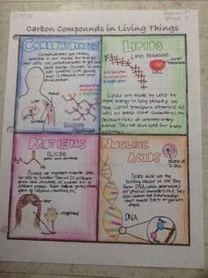 My Carbon Compounds poster shows the four different carbon compounds: Carbs, Proteins, Lipids (Fats), and Nucleic Acids. I wrote a short description of each and had illustrations of where they could be found in your body. Carbon compounds are important in Study Biology, Biology Lessons, Ap Biology, Teaching Biology, Science Lessons, Science Education, Biology Review, Biology Memes, Biology Projects