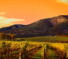 Napa's beautiful landscape #NapaValleyHoliday