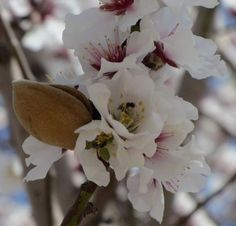 Sweet almond oil is perhaps one of the best-known carrier oils. It mixes well with virtually any essential oil. But…