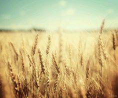 +золотая осень