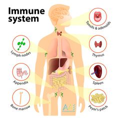 The core of a happy life and of real antiaging, is the immune system. We can help you optimize it.