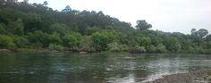 Pequenas trutas no Rio Minho