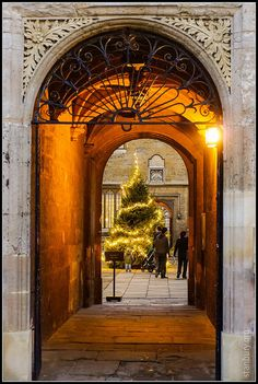 Bodleian Library Christmas tree, Oxford