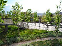 Πλατεία ΠηγώνΣκάλα, Λακωνία2009 - 2015ΔημόσιοΟλοκληρώθηκε5600 τ.μ.Η Utopia landscapes σχεδίασε το σύνολο των χώρων της Πλατείας Πηγών, της κεντρικής πλατείας της πόλης της Σκάλας στη Λακωνία. Στο σημείο αναβλύζουν πηγές, όπως υποδηλώνει και το τοπωνύμιο. Η περιοχή λοιπόν, παρ' ότι αστική, αποτελεί ένα πολύ ευαίσθητο φυσικό υδάτινο οικοσύστημα.Η βασική ιδέα σχεδιασμού επικεντρώθηκε στην προστασία και στην ανάδειξη του φυσικού οικοσυστήματος, μετατρέποντας το ταυτόχρονα σε χώρο συνάθροισης Outdoor Furniture Sets, Outdoor Decor, Garden Bridge, Outdoor Structures, Landscape, Home Decor, Homemade Home Decor, Scenery, Landscape Paintings