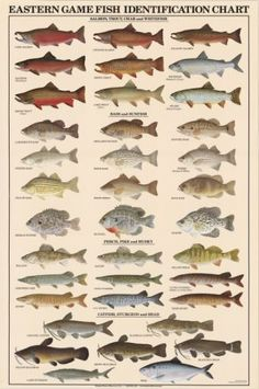 Eastern Game Fish Identification Posters