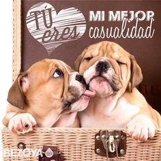 Tú eres mi mejor casualidad. #bezoya, perros, mascotas, animales, amor, amistad, compañeros, amigos, complicidad, cariño