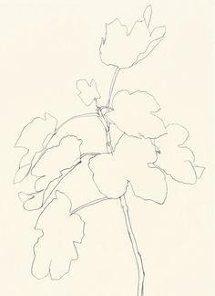 Ellsworth Kelly: Plant Drawings, Fig, 1982.