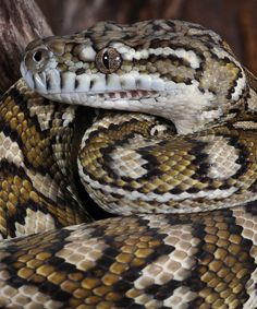 coolest snake pic ever