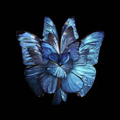 Blue - Butterfly Wings to-Resemble Flowers - Photography - Seb Janiak