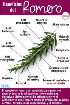 Natural Health Remedies, Natural Cures, Natural Healing, Herbal Remedies, Healing Herbs, Natural Medicine, Herbal Medicine, Gewichtsverlust Motivation, Medicinal Plants