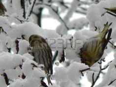 Птицы на ветке