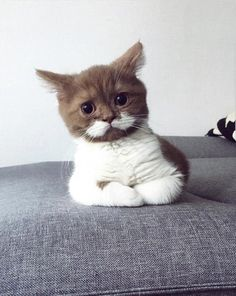 Love Cute Animals shares pics of playful animals, cute baby animals, dogs that stay cute, cute cats and kittens and funny animal images. Little Kittens, Cute Cats And Kittens, I Love Cats, Cool Cats, Kittens Cutest, Pretty Cats, Beautiful Cats, Animals Beautiful, Cute Baby Animals