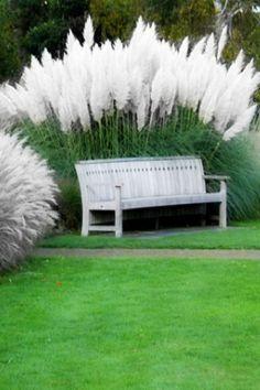 Pampas Grass, - Früchte im Garten Backyard Fences, Front Yard Landscaping, Diy Fence, Fence Ideas, Wooden Fence, Moon Garden, Dream Garden, Landscape Design, Garden Design