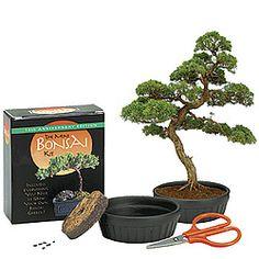 The Mini Bonsai Tree Kit $6.95