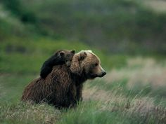 You have to be patient and watch your prey...(cub): I just want to go and play with my friends mom...