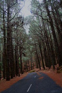 Carretera entre pinos canarios. Pinar en La Palma (Islas Canarias) via Flickr.