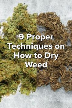 9 Proper Techniques on How to Dry Weed