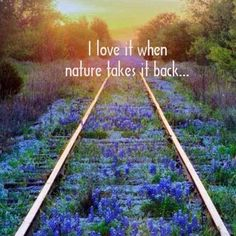 Stock Photos Blue Bonnets on Railroad Tracks - Stock Photography Online Beautiful World, Beautiful Places, Beautiful Pictures, Beautiful Sunset, Citations Photo, All Nature, Nature Quotes, Blue Bonnets, Train Tracks