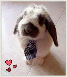 Willy in abbigliamento formale :)