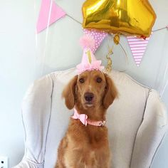 CUSTOMIZABLE Dog Bone MINI Birthday Cake Smash Party Hat Headband In Pink With Gold Or Silver Glitter Number
