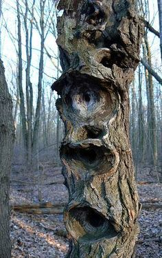 One of the greatest aspects of trees is they always look like they have a story to tell. They are tight-lipped secret keepers, even when you stare them down and wonder what on earth made them shaped like that.