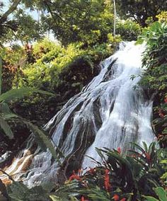 Fern Gully, Jamaica - I will go here one day.  Meanwhile, my back gardens are named after Fern Gully.