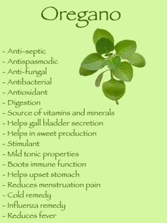 health benefits of oregano