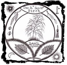 Birch  -   Beith  Ogham letter B Ruler of the 1st Lunar Month  24th December - 20th January  Powers: Purification, A Guardian of New Beginnings, Bringer of Hope,         Channeler of Emotion, Protection.