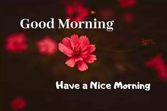 A collection of Beautiful Good Morning Images, beautiful good morning pictures, whatsapp good morning images and quotes. Sweet Good Morning Images, Morning Images In Hindi, Good Morning Picture, Morning Pictures, Picture Quotes, Love Quotes, Funny Quotes, Friends Image, Happy Birthday Images