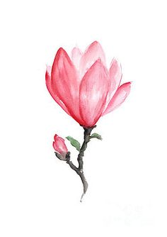 Magnolia abstract flower drawing by Joanna Szmerdt