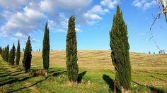 "La ""firma"" della nostra regione... i filari di cipressi.  #landscape #natura #nature #cipressi #alberi #trees #campagna #countryside #instalike #instalife #instamoment #livorno #toscana #tuscanypeople #tuscany #volgolivorno #volgotoscana #volgoitalia #igerslivorno #igersitalia #l4l #like4like #likeforlike"