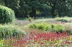 Sussex Prairies.  Paul & Pauline McBride, garden designers