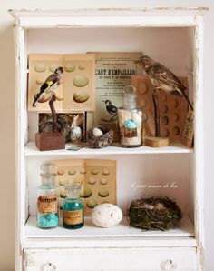 cabinet of nature