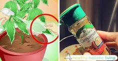 cinnamon - for healthy plants 6 tips